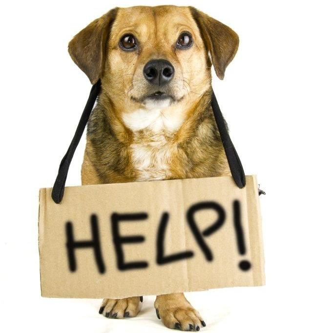 "Dog with ""Help!"" sign"