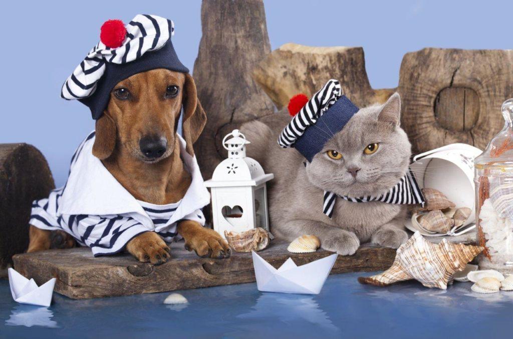 Pet traveling - 66618123