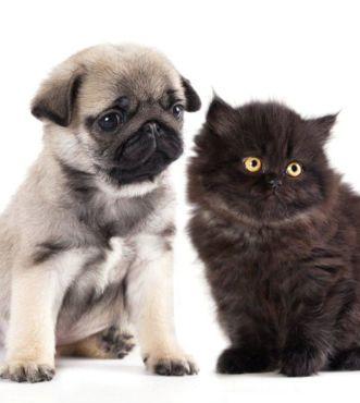 Puppy kitten - 57702178