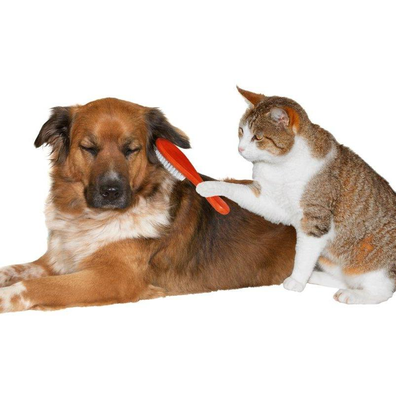 Cat grooming dog