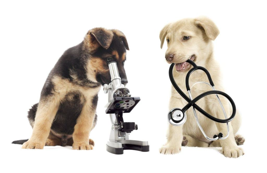 Dogs with lab equipment