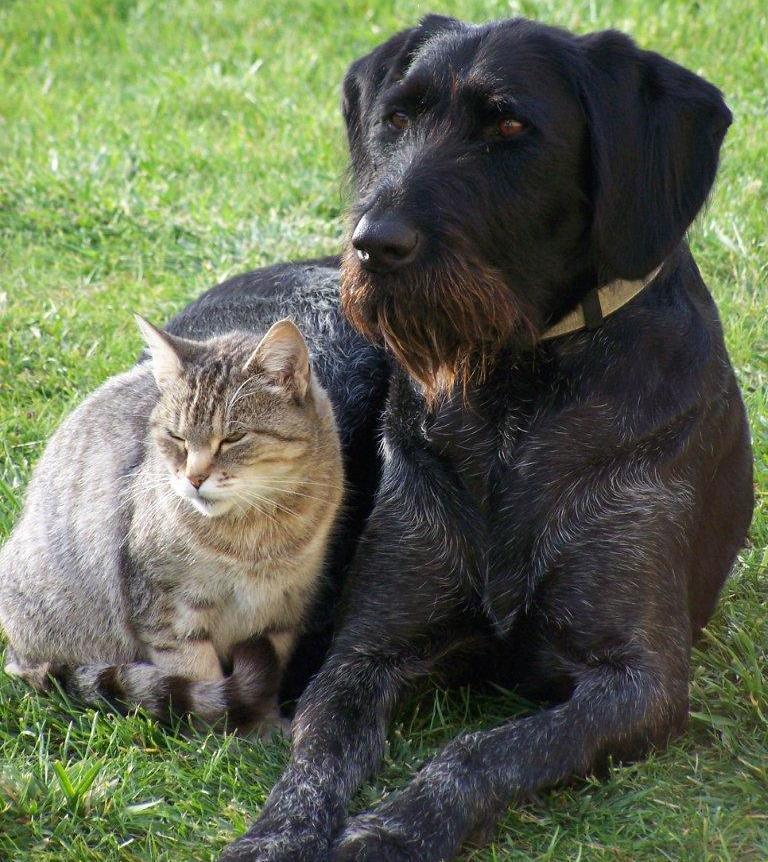 Senior cat and senior dog